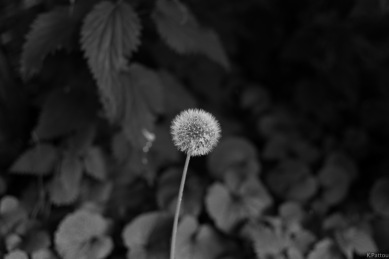Spring in black and white